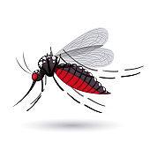 infectious gnat design
