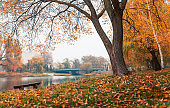 Colorful autumn park. Autumn trees with yellow leaves in the autumn park. Belgorod. Russia.