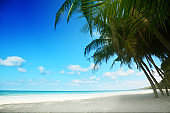 Tropical beach background with palm tree, Summer.