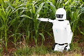 robotic farmer is standing in front of a cornfield, concepts like technology in agriculture or autonomous ai robot in the farming industry