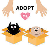 Human hand. Adopt me. Dog Cat inside opened cardboard package box. Ready for a hug. Puppy pooch kitten cat looking up to pink heart. Pet adoption Flat design Help animal concept White background.