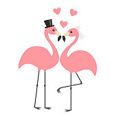 Two pink flamingo set. Wedding couple. Bride and groom. Black hat, veil, heart. Happy Valentines Day. Exotic tropical bird. Cute cartoon character. Zoo animal. Flat design. White background.