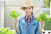 Asian farmer at hydroponic vegetables salad farm.