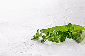 Small bunch of fresh herbs (thyme and sage) on white background. Copy space.