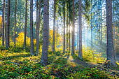Beautiful morning scene in the forest with sun rays and long shadows, real sunlight, natural landscape