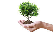 Human hands holding sprout young plant