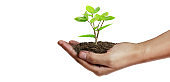 Human hands holding sprout young plant.environment Earth Day In hands of trees growing seedlings
