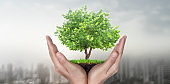 Hands holding sprout young plant.environment Earth Day In the hands of trees growing seedlings