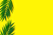 Minimal tropical green palm leaf on yellow  paper background.