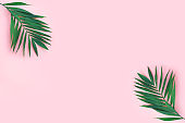 Creative flat lay top view of green tropical palm leaves on  pink paper background.