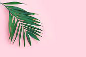 Minimal tropical green palm leaf on  pink paper background.