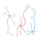 Neuron cells. Vector simple design illustartion.