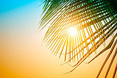 Palm trees against blue sky, Palm trees at tropical coast, vintage blue yellow toned and stylized, coconut tree,summer tree, retro style, Vacation or travel holiday concept.
