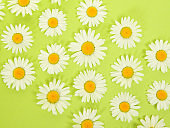 Flat lay with daisy flower heads in a arrangement seen from a high angle view