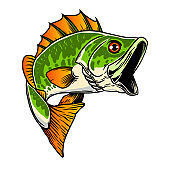 Illustration of bass fish. Big perch. Perch fishing. Design element for emblem, sign, poster, card, banner. Vector illustration