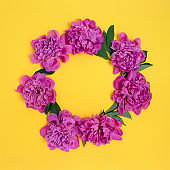 Wreath made of peonies flowers and green leaves on a yellow background.