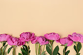 Border frame made of peony flowers on a beige background.