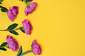Top view of peonies flowers on a yellow background.