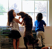 A Cute Brother and Sister Looking out the window of their house as the Girl Plays with their Border Collie Puppy