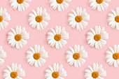 Chamomile flowers repetitive pattern on a pink background.