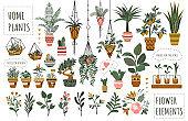 Set of isolated houseplants in flowerpots vector illustration