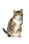 Pet cat in protective mask on white background