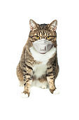 Tabby cat in medical face mask on white background