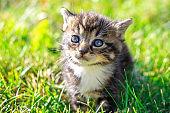 Kitten in a lawn