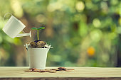 Finance and banking, Saving money concept: Pours water from a watering can, Green sprout on bucket full of coins on wood table.
