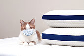 Cat in a medical mask resting on bed in the house. The concept of quarantine and pandemic Covid-19