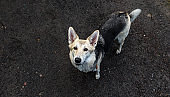 Cute gray dog standing on wet soil
