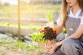 Beautiful portrait young asian woman smile harvest and picking up fresh organic vegetable garden in basket in the hydroponic farm, agriculture and cultivation for healthy food and business concept.