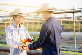 Two young asian man picking up fresh organic vegetable with basket together in the hydroponic farm beautiful, harvest and agriculture and cultivation for healthy food and business concept.