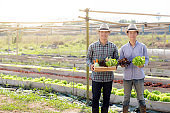 Beautiful portrait young two man harvest and picking up fresh organic vegetable garden in basket in the hydroponic farm, agriculture for healthy food and business entrepreneur concept.