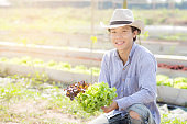 Young asian man farmer holding fresh organic green oak and red oak romaine lettuce for inspect quality in the hydroponic farm, harvest agriculture vegetable garden with business, healthy food concept.
