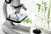 Scientific research plants and soil in microbiology laboratory with microscope.