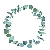 Eucalyptus tropical plant in form of circle on white background. Flat tropic border.