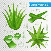aloe vera plant transperent set
