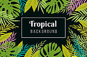 Tropical background. Rainforest palm tree leaves frame. Jungle forest planting vector exotic wallpaper