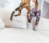 Low Section Rear View of Playful Cat Jumping while Playing with Owner on Sofa - stock photo