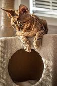 Bored Kitten Lying on Top Of Cat House - stock photo