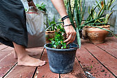 Woman adding soil to potted plant seedlings in greenhouse