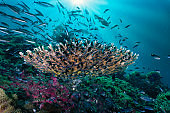 Coral reef underwater seascape with bait ball of tropical fish Bida Nok island Phi Phi Thailand