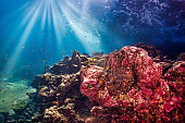 Underwater seascape, Ko Haa Island 3, Andaman Sea, Krabi, Thailand