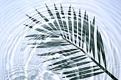 Palm leaf shadow on blue transparent blue gray liquid cosmetic water gel with circular rippling wave effect