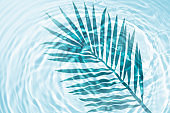 Palm leaf shadow on mint light green turquoise liquid cosmetic water gel with circular rippling wave effect
