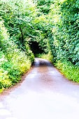 A typical narrow single track road in Cornwall.