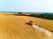 Aerial drone view: combine harvesters working in wheat field on sunset. Harvesting machine driver cutting crop in farmland. Organic farming. Agriculture theme, harvesting season. Quadcopter photo