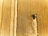 Aerial drone top view from above: combine harvesters working in wheat field. Harvesting machine driver cutting crop in farmland. Organic farming. Agriculture theme, harvesting season. Quadcopter shot