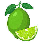 Fresh bright exotic whole and cut slice lime fruit isolated on white background. Summer fruits for healthy lifestyle. Organic fruit. Cartoon style. Vector illustration for any design.